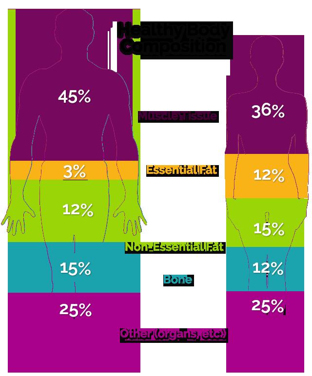 ترکیب بدن (Body Composition) | مجتمع آموزشی علامه طباطبایی